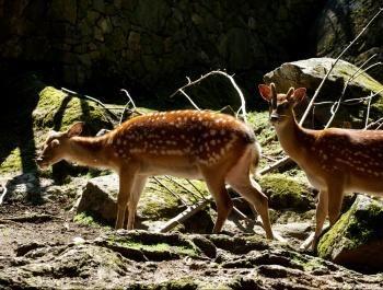 Chalet-hôtel Aux Mille Étoiles – Zoo
